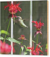 Humming Bird 7 Wood Print