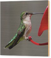 Humming Bird 8 Wood Print