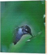 Humming Bird Feeding Wood Print