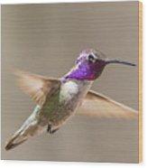 Humming Bird Freeze Frame Wood Print