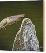 Humming Bird Hovering Over Water Fountain Getting A Drink Wood Print
