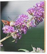 Humming Bird Moth Wood Print