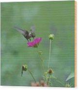 Humming Bird On A Cosmo Wood Print