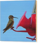 Humming In On The New Feed Sack Wood Print