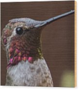 Hummingbird 16 Wood Print