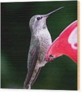 Hummingbird 23 Wood Print