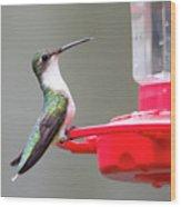 Hummingbird 33 Wood Print