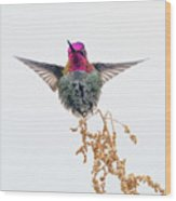 Hummingbird 7445-021418-1cr Wood Print