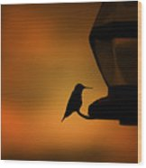 Hummingbird After The Storm Wood Print