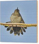 Hummingbird Airing Wings Wood Print