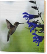 Hummingbird And Blue Flowers Wood Print