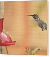 Hummingbird And Feeder Wood Print