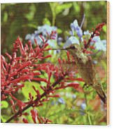 Hummingbird And Firespike Wood Print