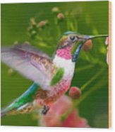 Hummingbird And Flower Painting Wood Print