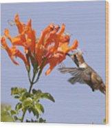 Hummingbird And Honeysuckle Wood Print