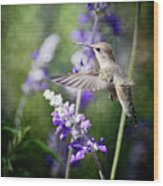 Hummingbird And Purple Lupine  Wood Print