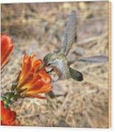 Hummingbird And The Hedgehog  Wood Print