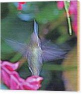 Hummingbird Angel Wood Print
