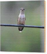 Hummingbird At Sunrise I See You Cameraman 02 Wood Print