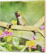 Hummingbird Attitude - Digital Paint 1 Wood Print