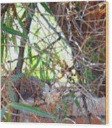 Hummingbird Babies Wood Print