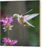 Hummingbird Beauty Wood Print