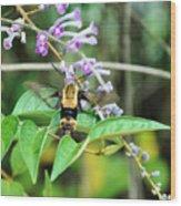 Hummingbird Bee Wood Print