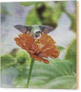 Hummingbird Bow Wood Print