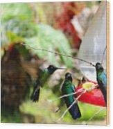 Hummingbird Close Encounter Wood Print