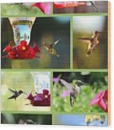 Hummingbird Collage 2 Wood Print