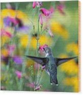 Hummingbird Dance Wood Print by Dana Moyer
