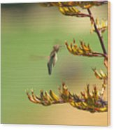 Hummingbird Drinking Nectar Wood Print