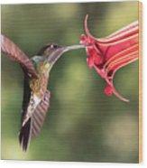 Hummingbird Enjoying Beautiful Flower Wood Print
