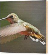 Hummingbird Facing Left Wood Print