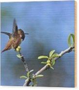 Hummingbird Feeling Frisky 1 Wood Print