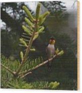 Hummingbird Flashing Wood Print