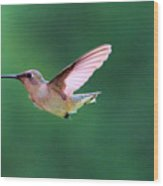 Hummingbird Flickering Its Tongue Wood Print
