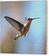 Hummingbird Friend Wood Print