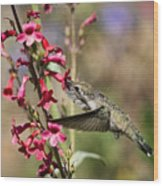 Hummingbird Haven  Wood Print