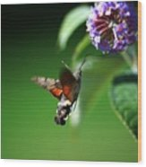 Hummingbird Hawk Moth - Five Wood Print