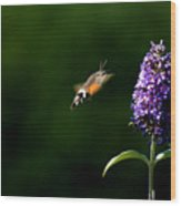 Hummingbird Hawk Moth - Three Wood Print