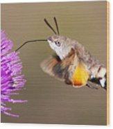 Hummingbird Hawk-moth  Wood Print