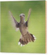 Hummingbird Hello There Wood Print