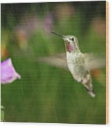 Hummingbird Hovering In Rain Wood Print