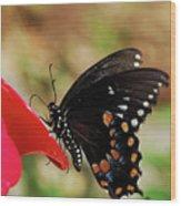 Hummingbird Imposter Wood Print