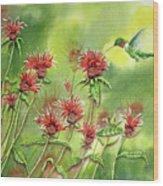Hummingbird In Beebalm Wood Print