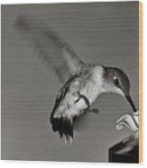 Hummingbird In Black And White Wood Print