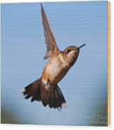 Hummingbird In Flight Wood Print