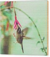 Hummingbird In Flight Sucking On A Juicy Pink Flower Wood Print