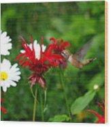 Hummingbird In Flowers Wood Print